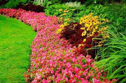Landscaping Cambellfield